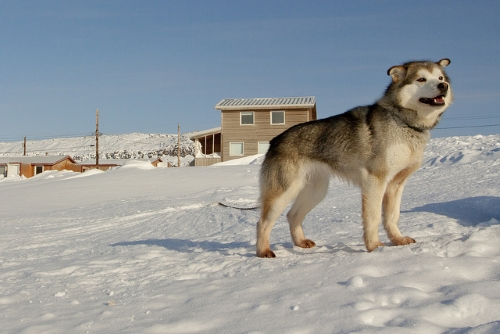 chien Nortern territories