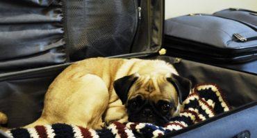 Des toilettes pour chiens dans les aéroports américains