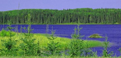 foret boreale sask automne