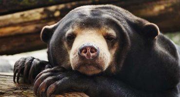 Une application permet aux touristes de dénoncer le trafic animalier