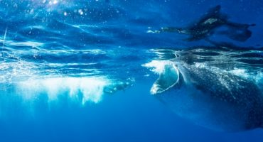 6 astuces pour réussir vos photos sous l'eau