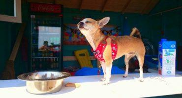 Un bar pour chiens sur la plage en Croatie