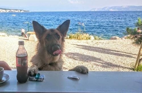bar chiens croatie