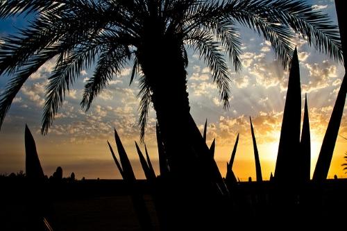cap vert palmier