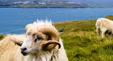 Sheep View : Google Street View géré par des moutons sur les îles Féroé