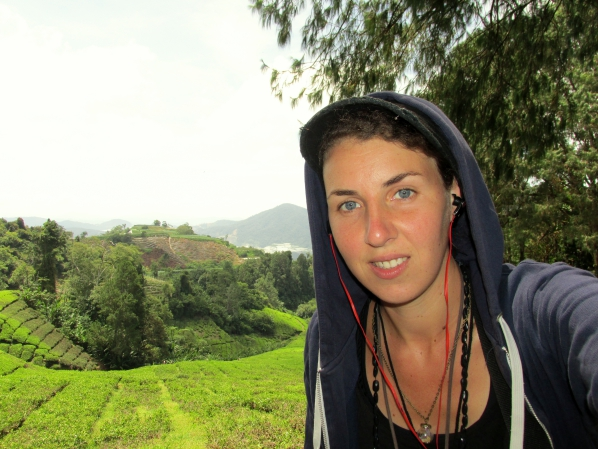 Dans les plantations de thé des Cameron Highlands, en Malaisie
