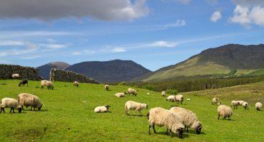 À la découverte de l'Irlande ancestrale