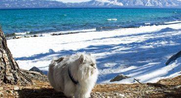 Gandalf, chat voyageur et star d'Instagram