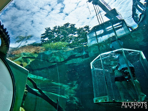 Australie_cage