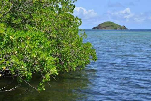 Mangrove de la Caravelle
