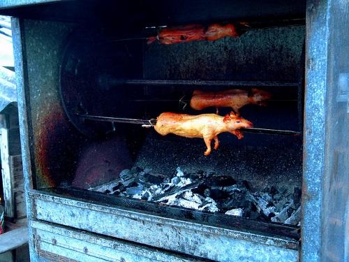 cochons grillés