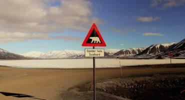 Destination grand froid: voir des ours polaires au Spitzberg