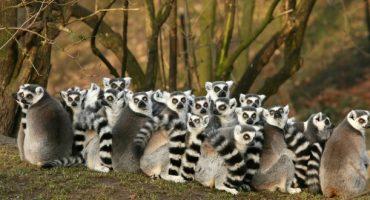 Destination de la semaine : Madagascar