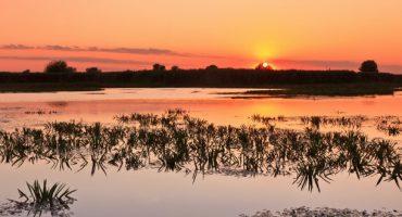 Voyage en terre sauvage, dans le plus grand delta d'Europe