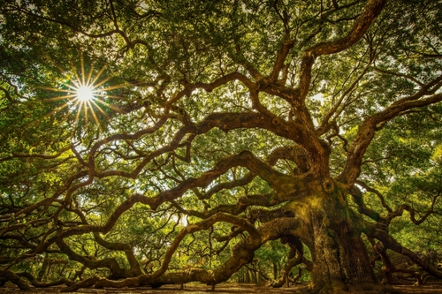 L'Angel Oak (1)