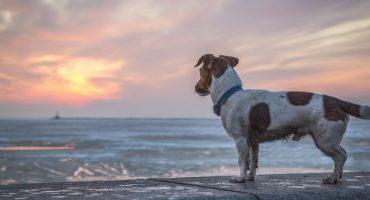 The City Dog : la solution de conciergie d'animaux domestiques idéale !