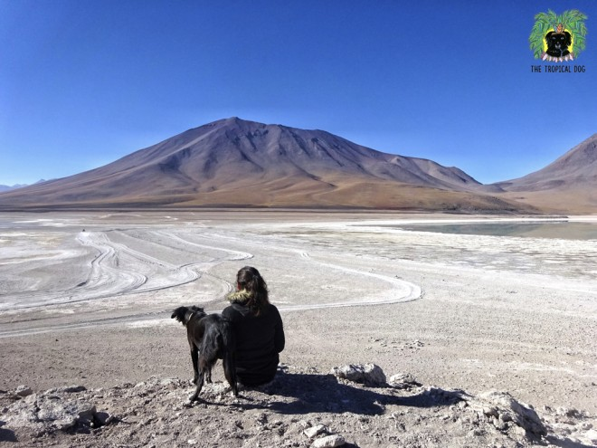The Tropical Dog en Bolivie