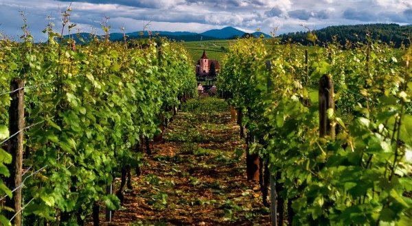 Route des vins - Alsace