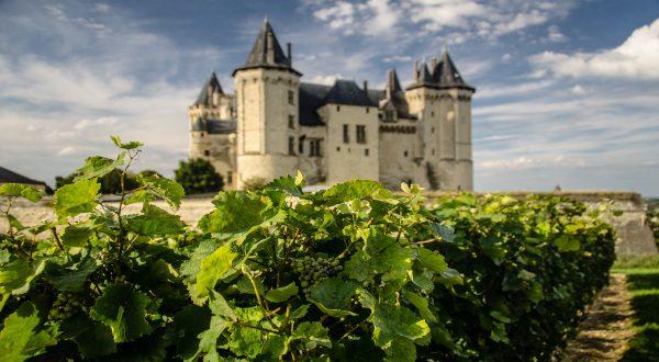 Vignoble à Saumur