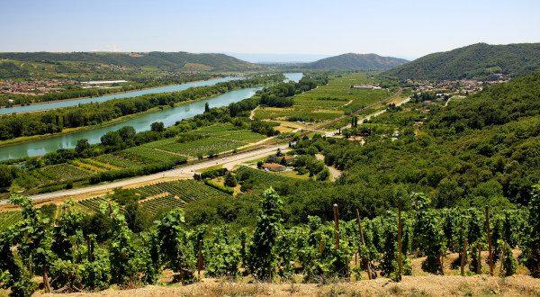 Vignoble vallée du Rhône