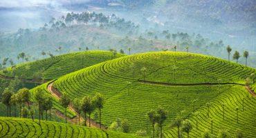 Dans le sud de l'Inde, découvrons le Kerala et le Tamil Nadu