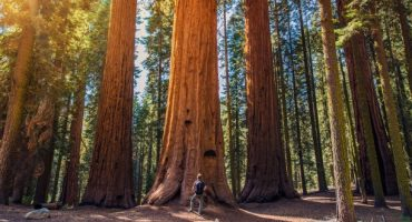 Zoom sur le parc national de Sequoia