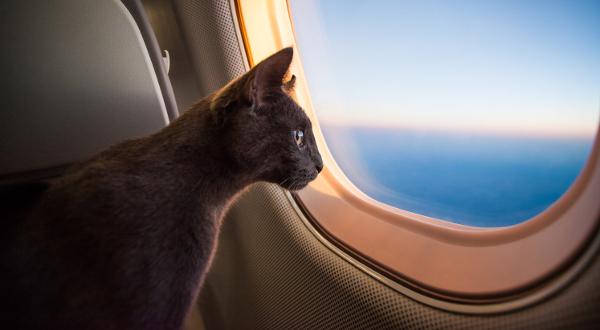 Animaux de compagnie et avion