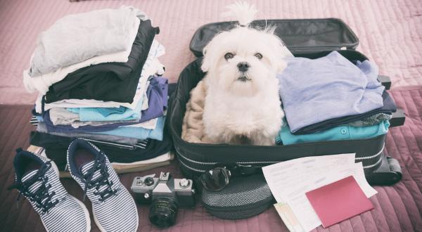 Emporter son animal de compagnie en voyage