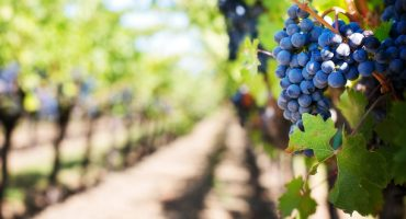 Voyages œnologiques : des vins là où on ne les attend pas