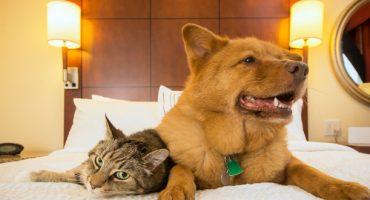 Top 5 des hôtels pour chiens et chats dans le monde