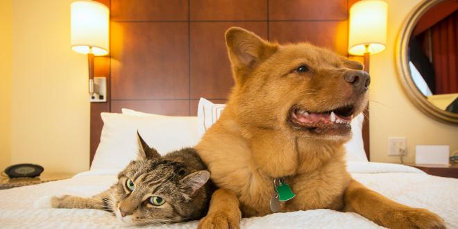 top 5 des h tels pour chiens et chats dans le monde. Black Bedroom Furniture Sets. Home Design Ideas