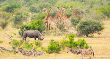 Top 5 des plus belles destinations safari dans le monde