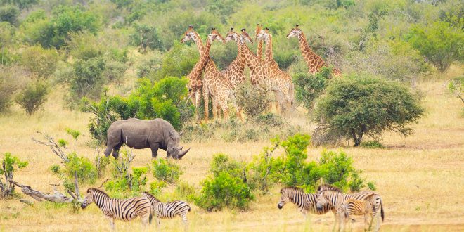 destinations-safari-parc-kruger