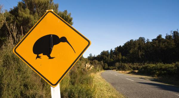 Kiwi-animal