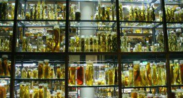 Les musées insolites à visiter en voyage