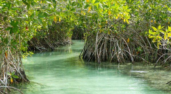 laguna-sian-kaan-Muyil-mexique-maya