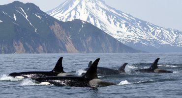 Les meilleurs endroits pour observer les mammifères marins dans le monde