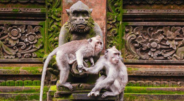 Forêt des singes Indonésie