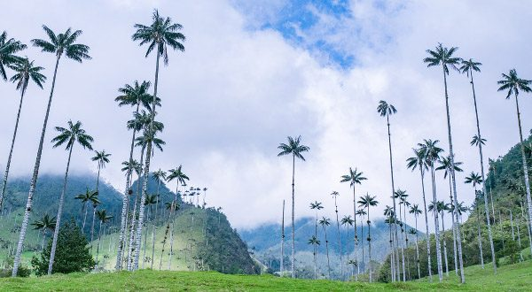 Valle-Cocora-Colombie
