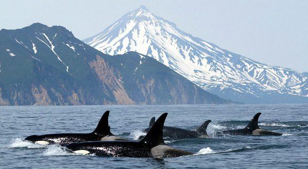 baleines tueuses