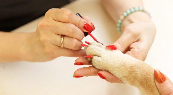 Bar à ongles pour chien
