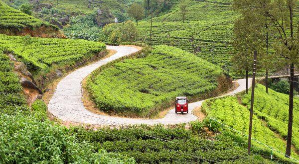 thé Sri Lanka