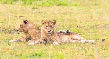 La Girafe & le Grizzly : le blog dédié aux amoureux des voyages et des animaux
