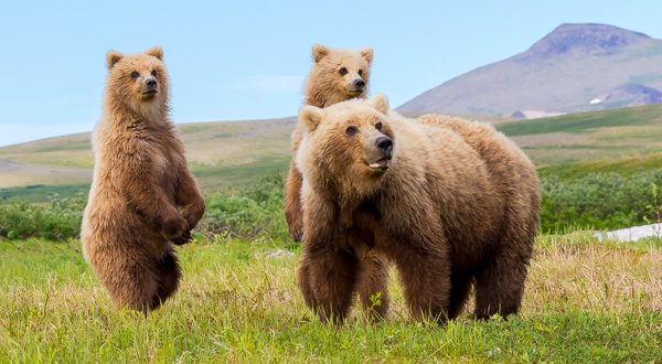 7-lagirafeetlegrizzly-ours-famille