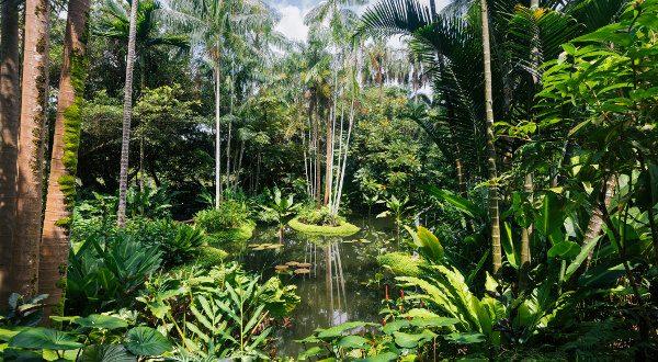 Jardin-Botanique-Singapour