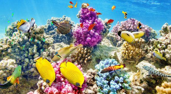 Barrière de corail AustralieBarrière de corail Australie