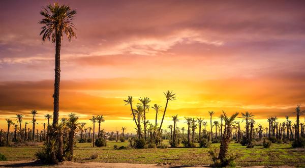 Palmeraie Marrakech iStock
