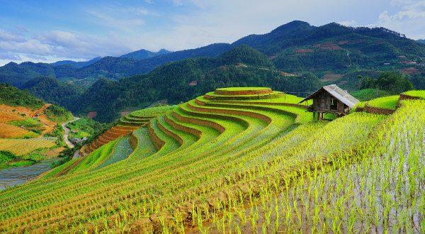Rizière vietnam
