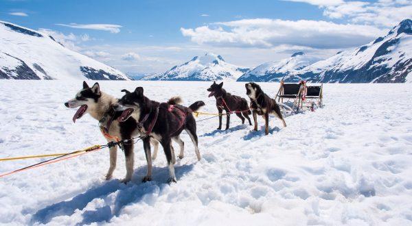 Chien de Traîneau Alaska iStock 600x330
