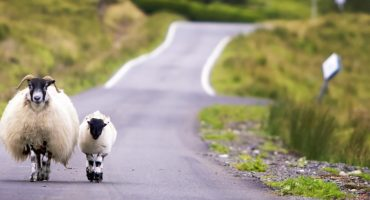 Les choses à voir et à faire en Écosse
